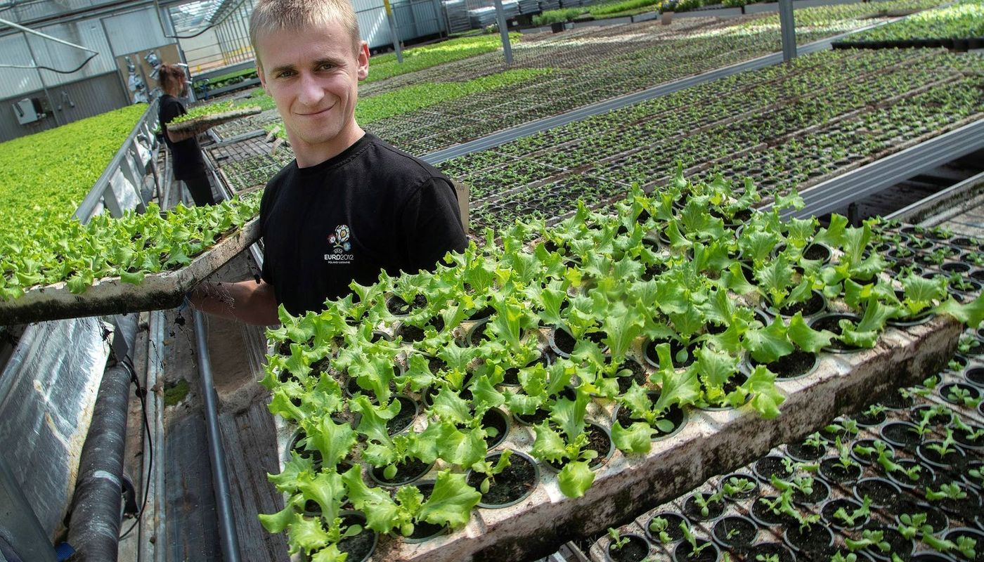 Springtime is finally coming. Roman Biletskyi and salad at Hortiherttua Oy in Karjalohja. The horticulture produces tomatoes, cucumbers and a variety of salads. A few Ukrainian seasonal workers are among the staff.